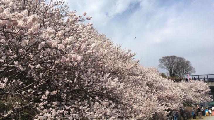 2019年3月16日(土)時点のリスク資産評価額、春爛漫!我が家のリスク資産にも春は来るか?
