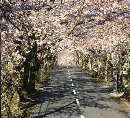2019年3月 月次運用レポート、米国株花開き、日本株はまだ蕾。