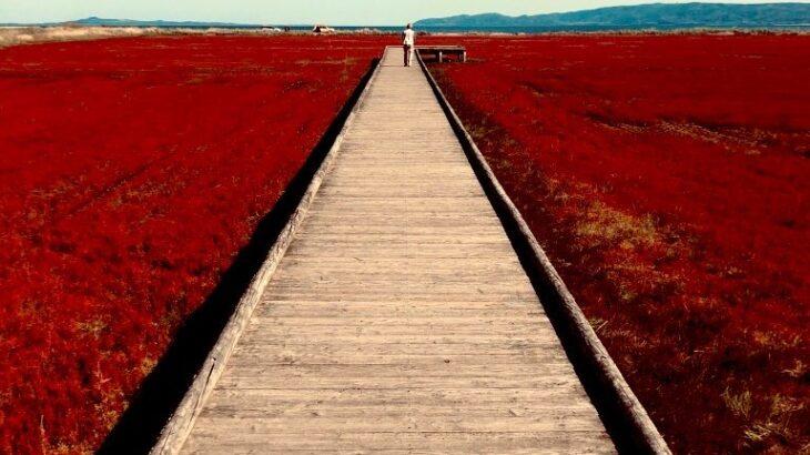 【配当金で旅行しよう】2021年秋の北海道!層雲峡-美瑛-定山渓と一足早い秋を楽しむ旅